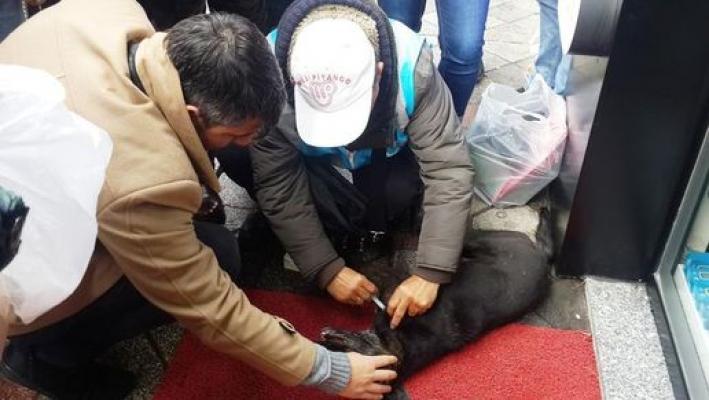 Mersin'de insan görünümlü caniler yakaladıkları kediyi yakarak öldürdüler