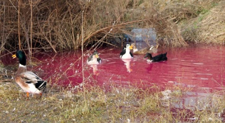 Yalova'da yer altından gelen kırmızı su paniği