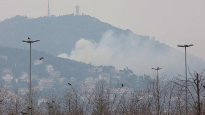 Büyükada'da ormanlık alanda yangın çıktı