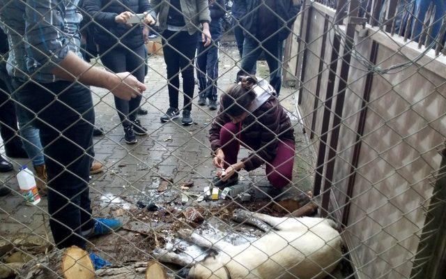 Zehirlenen iki köpek çevredekilerin duyarlılığı sayesinde kurtuldu