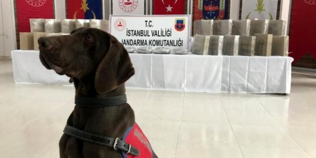 İstanbul'da uyuşturucu operasyonu! Jandarmanın yaptığı operasyonda 50 kilo esrar ele geçirildi