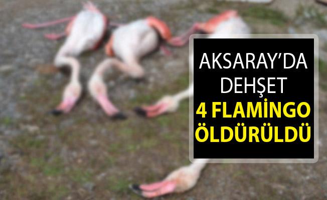 Aksaray'da Flamingo Katliamı! 4 Flamingo Öldürüldü