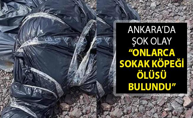 Ankara Çubuk'ta Onlarca Sokak Köpeği Ölüsü Bulundu! Ankara'da Köpek Katliamı