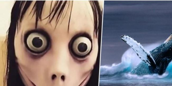 MEB'den Mavi Balina ve Momo İçin Özel Portal