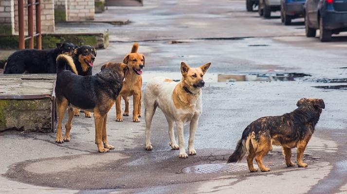 Sokak Köpekleri Isırdı ! Devletten 5 Bin TL Tazminat Aldı