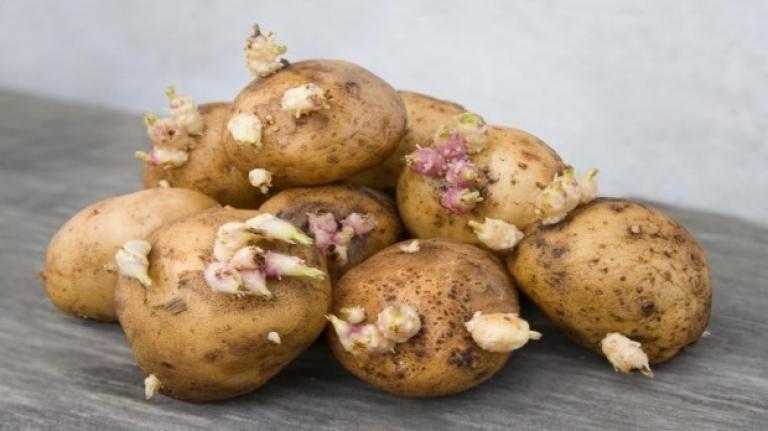 Dikkat, uzmanlar tüketmeyin diye uyardı! Filizlenen patates yenir mi?