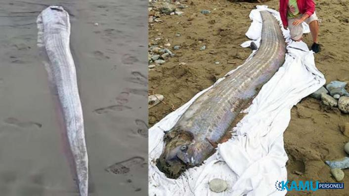 Kıyıya vuran kürek balığı panik yarattı! Büyük depremin habercisi olarak biliniyor...