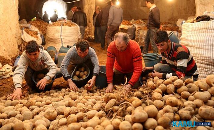 Patates fiyatları hakkında sevindirici gelişme! Hasatla birlikte 2,5 liraya kadar düştü...