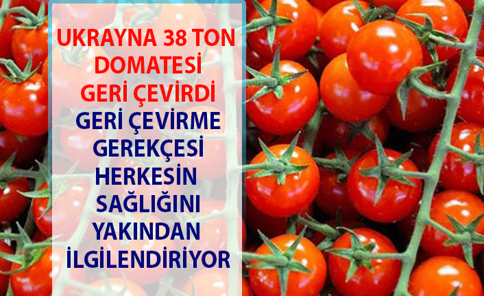 Türkiye domateslerinde sağlığa zararlı madde var gerekçesi ile 38 ton iade edildi.
