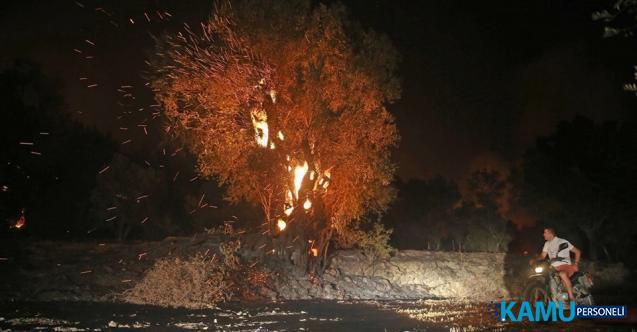 Muğla Dalaman'daki Yangın Kontrol Altına Alındı