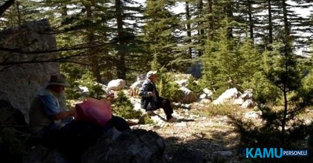 İbradı Belediye Başkanı Serkan Küçükkuru, ağaç katliamına dikkat çekmek için bölge halkını eyleme çağırdı.