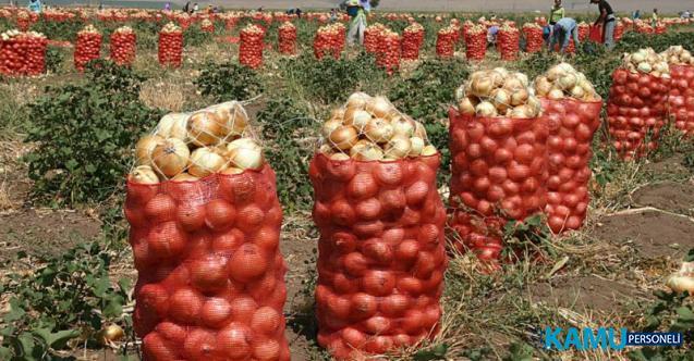 Soğan Fiyatları Markette 2.5 TL Tarlada 30 Kuruş