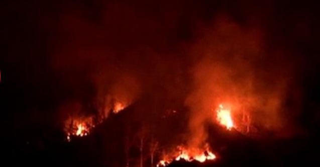 Karadeniz'de çıkan yangınların nedeni merak konusu oldu! İçişleri Bakanlığı'ndan flaş açıklama!
