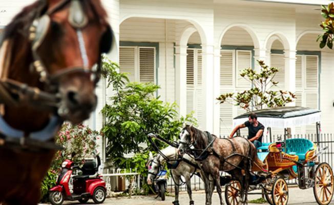 İBB'den sevindiren haber: Adalalardaki atlar kamulaştırılıyor!