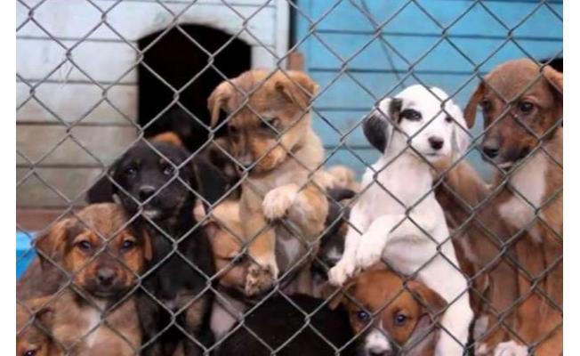 Siyasiler ortak paydada buluştu! Meclis hayvan hakları yasasını düzenledi!