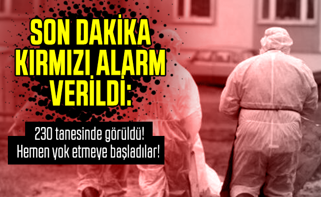 Son dakika kırmızı alarm verildi: 230 tanesinde görüldü! Hemen yok etmeye başladılar!