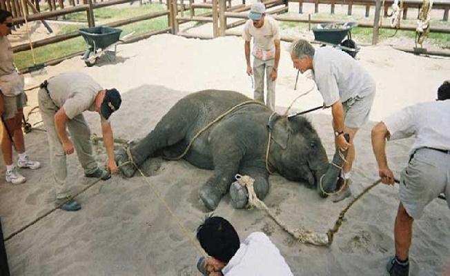 Dünya Doğayı Koruma Vakfı Açıkladı! Covid-19'un Sebebi Doğanın Ve Hayvanların Sömürülmesi