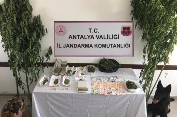 Antalya'nın Kaş ilçesinde bir serada esrar ele geçirildi!