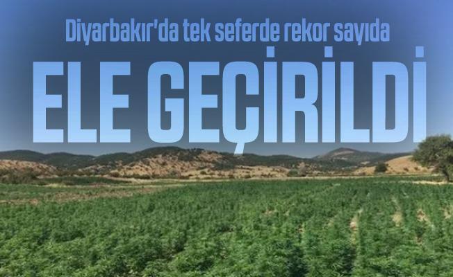 Diyarbakır'da tek seferde rekor sayıda uyuşturucu madde ele geçirildi