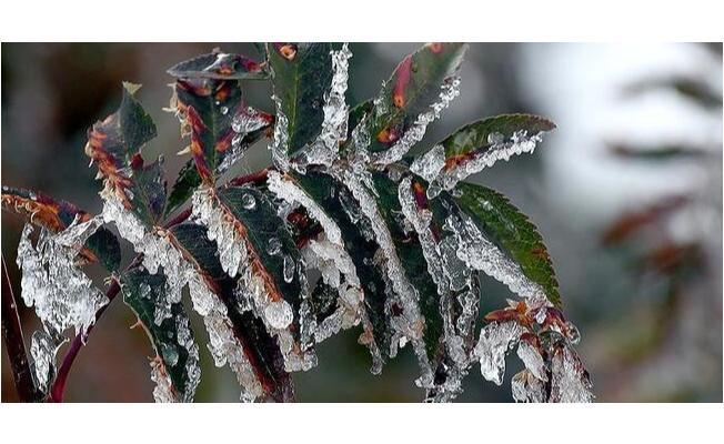 Meteoroloji'den son dakika zirai don uyarısı! Bu gece şiddetli fırtına, kar ve yağmur geliyor! Önleminizi alın!