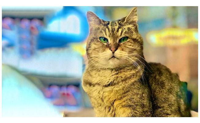 Ayasofya'nın kedisi Gli'den kötü haber!