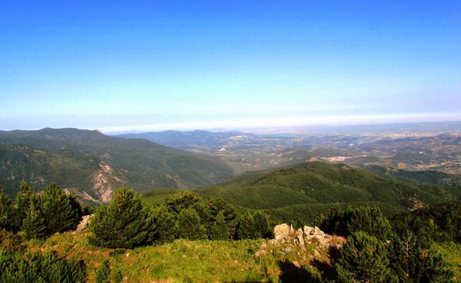 Cengiz Holding'in bakır madeni için Kaz Dağları'nda 3.5 milyon ağaç keseceği iddiası