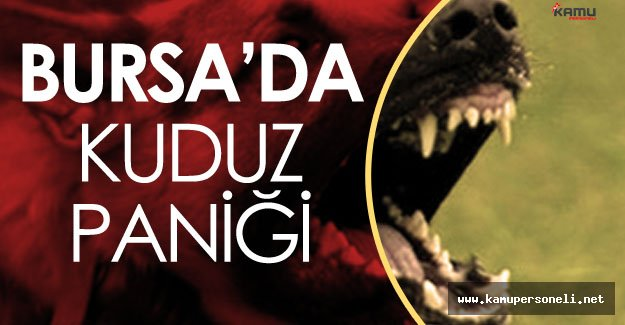Bursa'da Kuduz Paniği ! Köyler Karantinaya Alındı