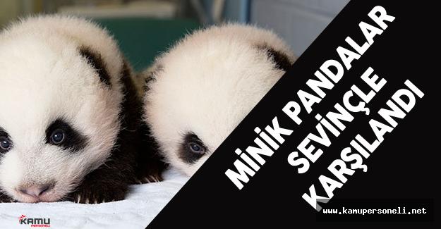 Çin'de İkiz Panda Sevinci