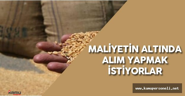 "Gaytancıoğlu: ""Buğday Alım Fiyatı Maliyetin Altında"""