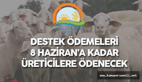 İzmir İl Müdürlüğü 2015 Yılı Anaç Koyun Keçi Destekleri Hakkında Duyuru Yaptı