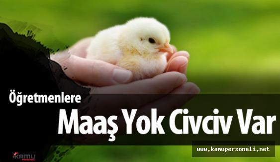 Öğretmen Maaşları Nakit Para Yerine Civcivle Ödendi