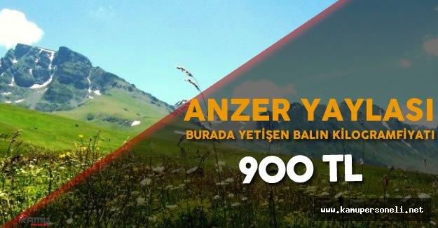 Rize'de Yetiştirilen Anzer Balının Kg. Fiyatı 900 Lira