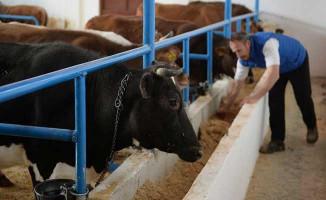 Gıda Bakanlığı Hayvancılık Destekleme Başvuruları Ne Zaman Sona Erecek?