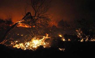 Bodrum'da Makilik Alanda Orman Yangını!