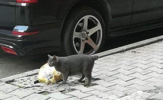 Büyü için kedi kuyruğu- Büyü için kedilerin kuyruklarını kesiyorlar