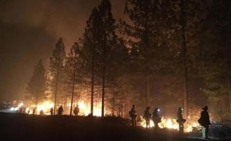 California'daki orman yangınlarında can kaybı 81'e yükseldi