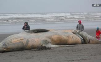 Kıyıya vuran balinanın ölüm sebebi ibretlik oldu