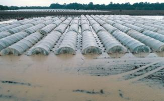 Mersin Tarsus'da, sel felaketinde seralar sular altında kaldı