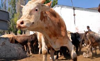 Sırbistan'dan 5 bin ton etin ithal edilmesi Mecliste kabul edildi