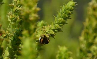 Bitki koruma ürünlerine sıkı takip