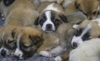 Hayvanlara yönelik şiddet suç kapsamına alınacak