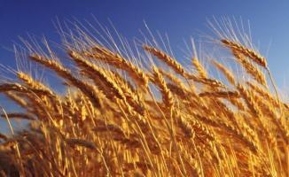 Türkiye'nin Rusya'dan yaptığı buğday ithalatı yüzde 40 arttı