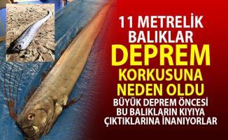 11 Metrelik Dev Balıklar Deprem Korkusuna Sebep Oldu!