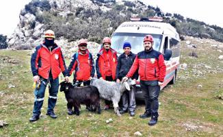 Kayalıklarda mahsur kalan keçileri AKUT kurtardı