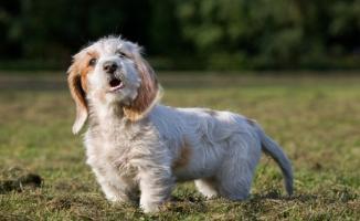 Köpeklerin havlamasını yasaklayan belediye başkanı Dünya gündeminde yer aldı
