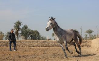 Mısır'da safkan Arap atlarının eğitildiği merkez: