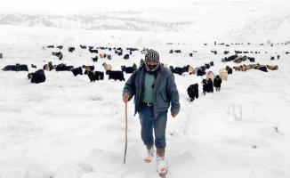Muş'ta bazı besiciler, dondurucu soğuk ve karda, naylon çadırda kalarak hayvanlarının bakımını yapıyor