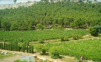 Mustafa Kemal Atatürk'ün Mirası Atatürk Orman Çiftliği'ndeki (AOÇ) 81 Bin Metrekare Alan Kiraya Veriliyor