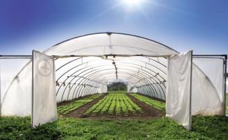 Sera yatırımı için 'Minimum arazi kapasitesi' şartında değişiklik yapılıyor
