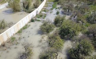 Mersin'de limon bahçeleri ve muz seralarını su bastı